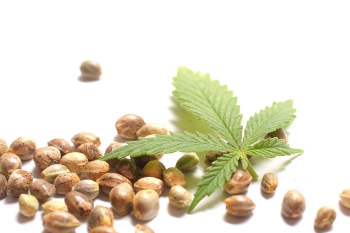 گیاهان دارویی آرامبخش اعصاب