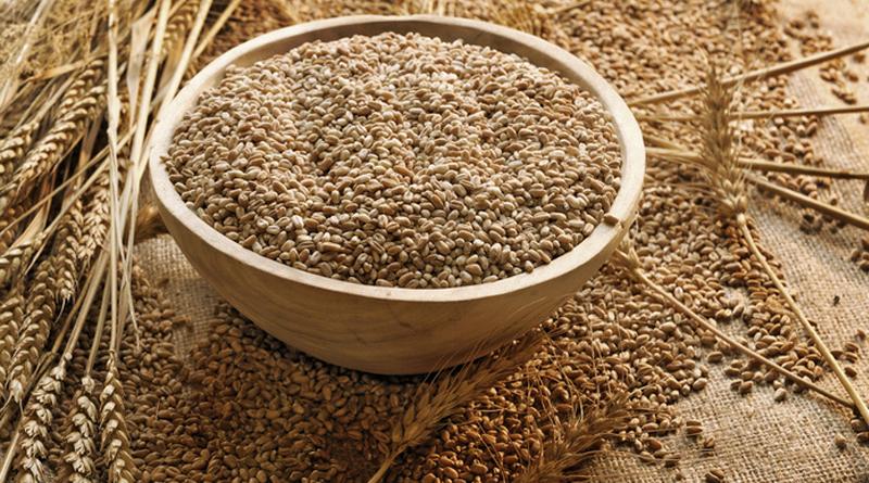 خواص گندم، سبوس گندم و جوانه گندم برای سلامتی
