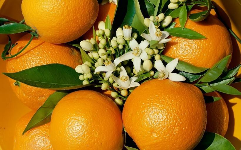 آشنایی با خواص نارنج، پوست آن، بهارنارنج و آب نارنج