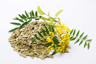 خواص گیاه سنا و فواید دارویی آن برای سلامتی