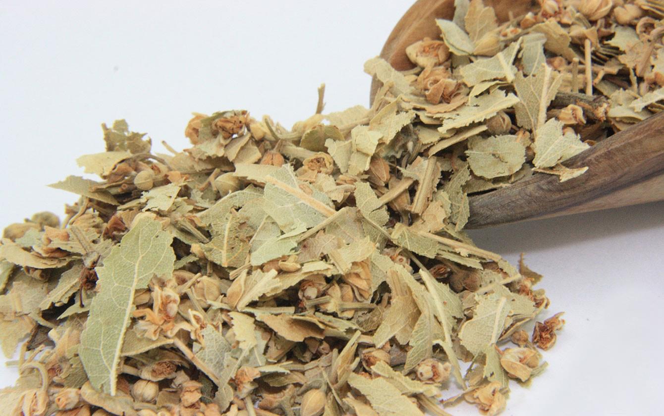 خواص تیول (زیرفون) و آشنایی با فواید این چای گیاهی