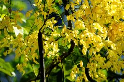 خواص گیاه فلوس (۲)