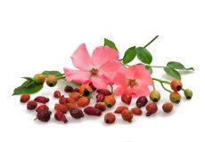 خواص گل نسترن (۹)